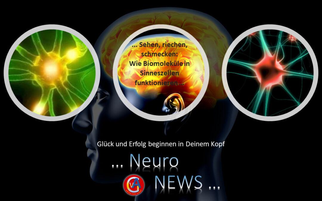 Sehen, riechen, schmecken: Wie Biomoleküle in Sinneszellen funktionieren